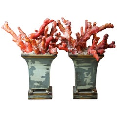 Red Chinese Bamboo Coral Set in Cast Planters