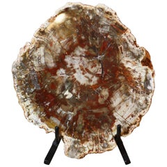 Petrified Wood on Iron Stand