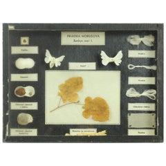 Rare School Model of Silk Moth Life, Wall Art, Czechoslovakia, circa 1960