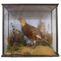 Early 20th Century Taxidermy Grouse