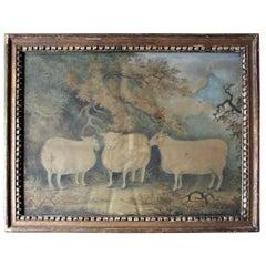 Early 19th Century Naïve School Watercolour of Three Prize Sheep, circa 1812