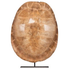 "Late 19th Century ""Blonde"" Turtle Shell, on a Lamp Mounted Stand"