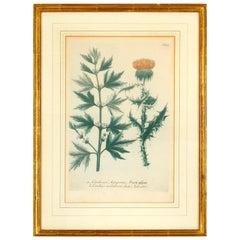 Set of 6 Framed Vintage Botanicals