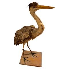 Extremely Life like Taxidermy Heron Bird