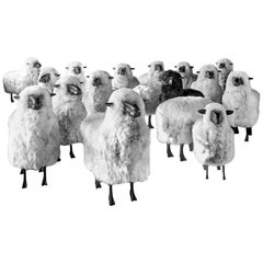 Photograph in Black & White of a Flock or Herd of Sheep