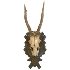 Black Forest Antlers Trophy with Leaf and Branch Decoration on the Mount
