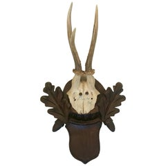 Black Forest Antler Trophies Mounted on a Shield Back with Leaf Decoration