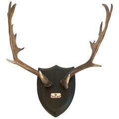 19th Century Red Stag Antlers Mounted on Shield Shaped Plaque