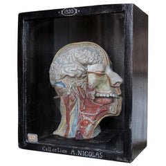 Carved Scientific Display by A. Nicholas