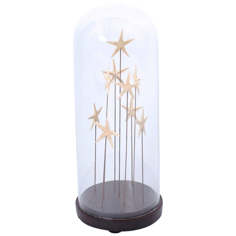 Starfish in a Vintage Glass Specimen Dome For Sale