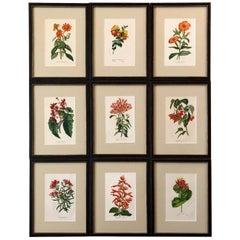 Set of Nine Hand Finished Van Houtte Red Flower Chromolithographs