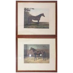 Paar des 20. Jahrhunderts englische Drucke Pferde Nussbaum Rahmen