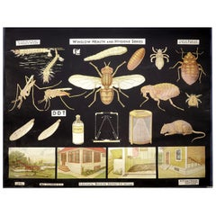 Winslow Health and Hygiene Poster, Insect Enemies