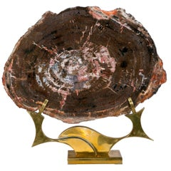 Petrified Wood from Arizona on Brass Base