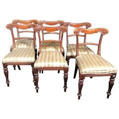 19th Century Regency Mahogany Chairs, 1830s