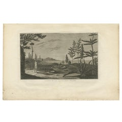 Antique Print of Pine Tree Island by Cook '1803'
