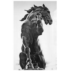 """""""Black Horse"""", Tristan Govignon, 2018"""