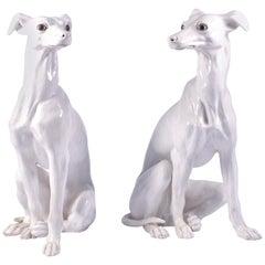 Pair of White Glazed Terracotta Greyhounds