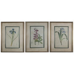 Set of Three-Botanical Floral Prints, circa 1990