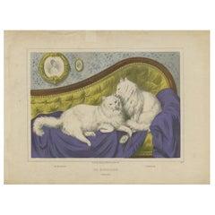Antique Cat Print 'The Medaillon', circa 1850