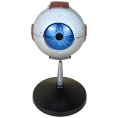 1960s Vintage Italian Anatomical Human Left Eye Model in Plastic by Paravia