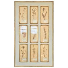 French Botanical Herbier