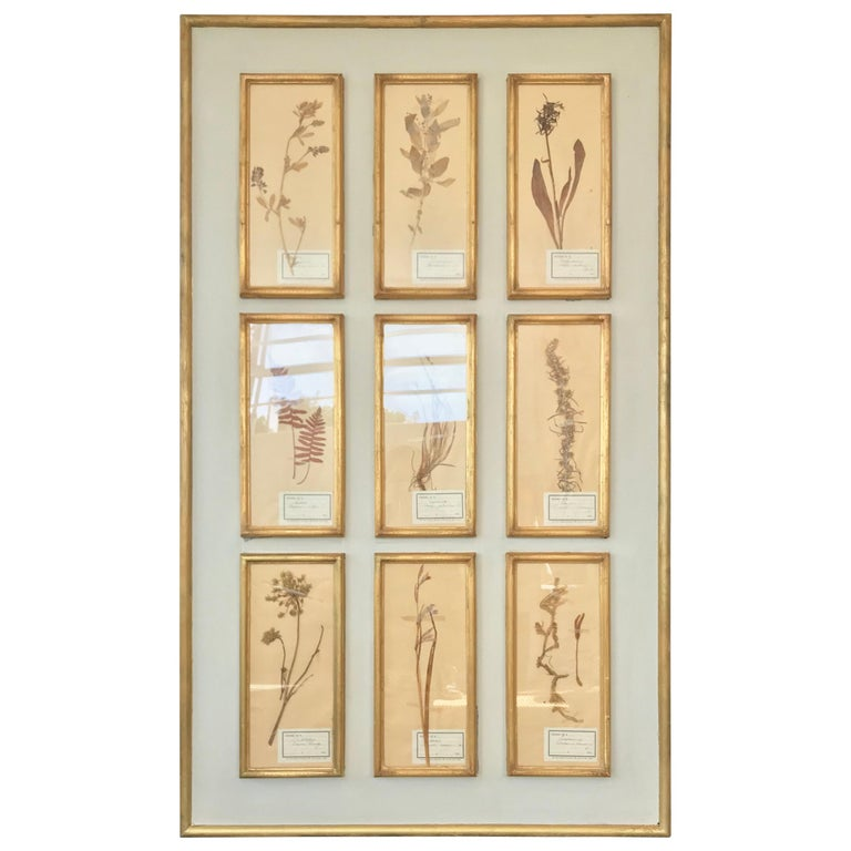 French Botanical Herbier For Sale