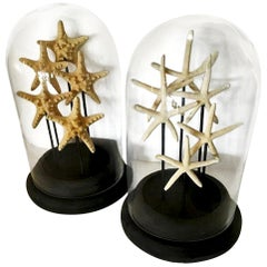 Pair of French Glass Domes, with Natural Starfish, Mid-Century Modern