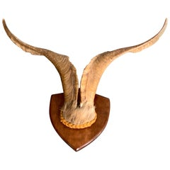 Vintage Wall-Mounted Antler Trophy on Shield Shaped Plaque