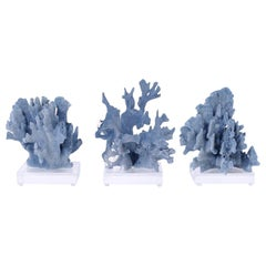 Three Blue Coral Specimens on Lucite