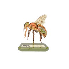 Entomological Model of a Bee Made in Germany in the 1950s