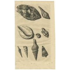 Antique Print of Shells 'No. 1' by Valentijn, 1726