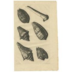 Antique Print of Shells 'No. 86' by Valentijn, 1726