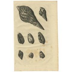 Antique Print of Shells 'no. 66' by Valentijn '1726'