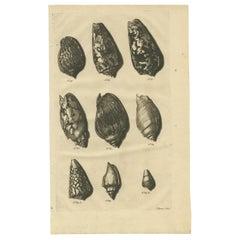 Antique Print of Shells 'No. 59' by Valentijn, 1726