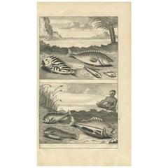 Antique Print of Fish Species 'no. 461' by Valentijn '1726'