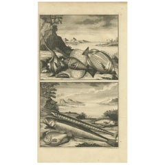 Antique Print of Fish Species 'no. 449' by Valentijn '1726'