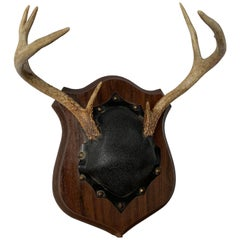 Small Mounted Deer Antlers and Leather Covered Skull on Plaque