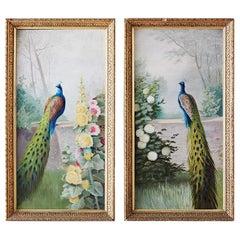 Pair of American School Peacock Paintings, 20th Century