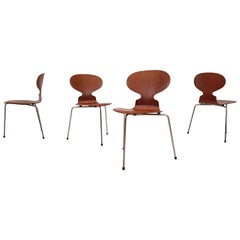 Early Model 3100 'Ant' Chairs by Arne Jacobsen for Fritz Hansen, Designed 1952