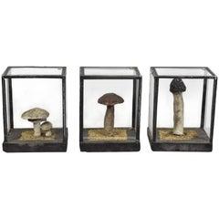 Vintage Scientific Plaster Mushroom Models in Original Plexiglass Case