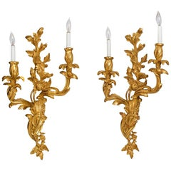 Pair of Louis XV Style Gilt, Two-Light Sconces