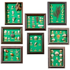 Collection Vintage French Sea Shells Set Eight, circa 1960
