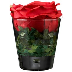 Placeholder Open Rose Boxwood Set Arrangement, Flowers, Italy