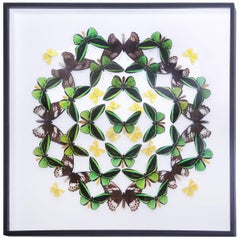 Green and Yellow Butterflies Wall Decoration under Glass Box Frame