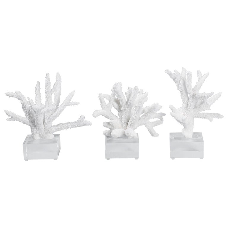 Three White Coral Specimens on Lucite For Sale