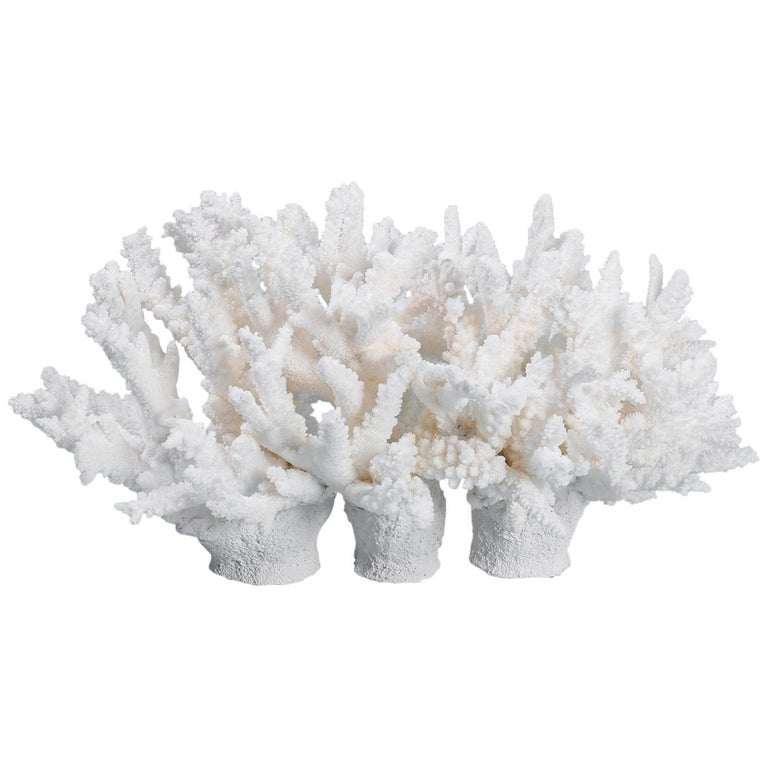 White Coral Sculpture or Centerpiece For Sale