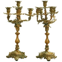 Pair of French New Rococo Gilt Bronze Candelabra with 5 Arms