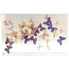 Mid-Century Modern Butterflies Mounted in Lucite Case