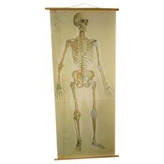 Antique Linen Skeleton School Poster, 1920s